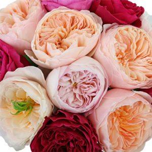 Rosa david austin, country